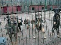 Psy na Euro 2012